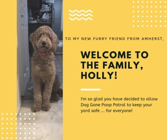 welcome holly